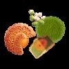 Hạt Sen Trà Xanh (2 Trứng ĐB)